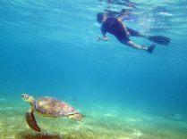 Snorkeling with Sea Turtles