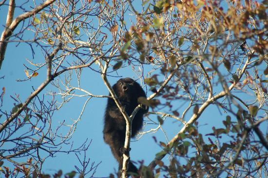 punta-laguna-nature-reserve